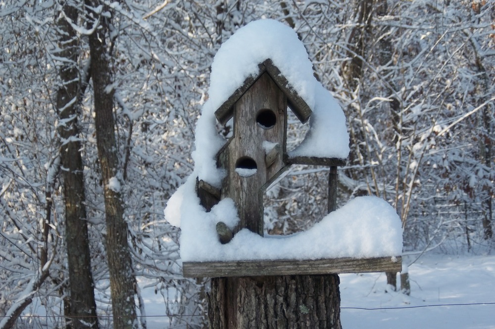 Snow on a birdhouse